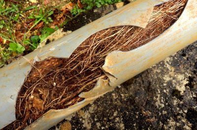 tree roots in underground pipe